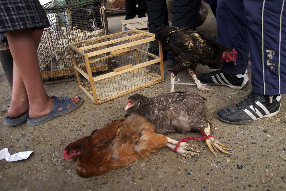 Live chickens and ducks are available to be butchered at home.