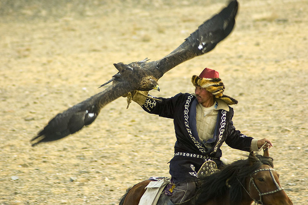 A golden eagle lands on its owner's arm during a competition at the Eagle Festival in Bayan Ulgii.