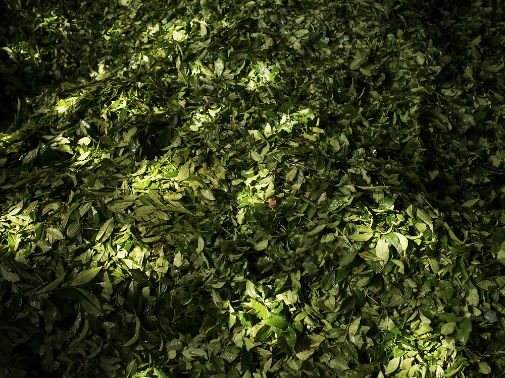 The state-fixed price for tea in 2013 is set at 135 lira (about $66) per kilogram.