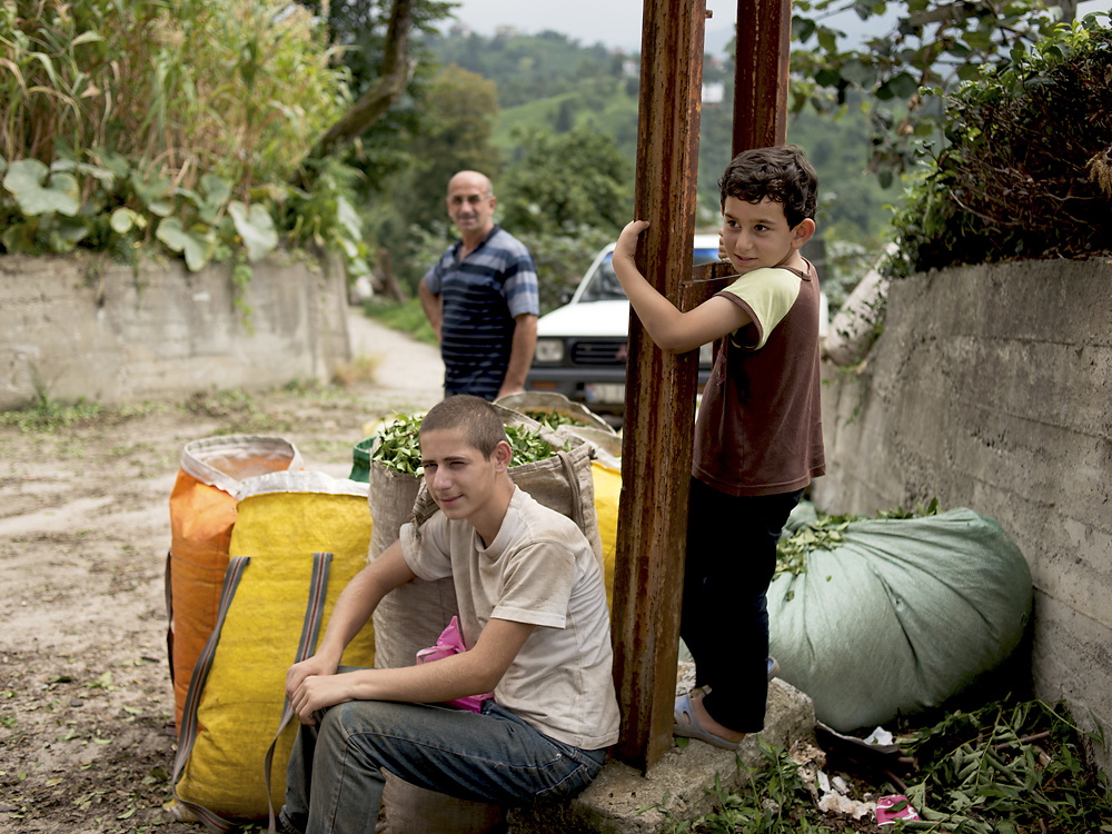 Kids take a break after helping their parents pick tea at a plantation near Ardeşen.