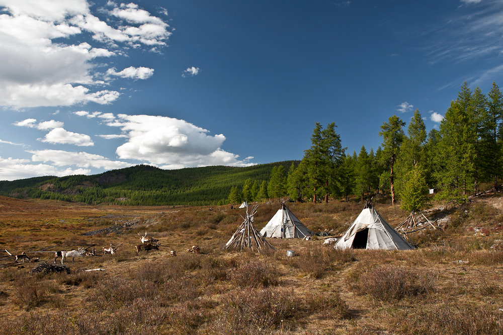 Traditional tepee dwellings called 'ortz' by the Tsaatans dot seasonal campsites across the taiga.