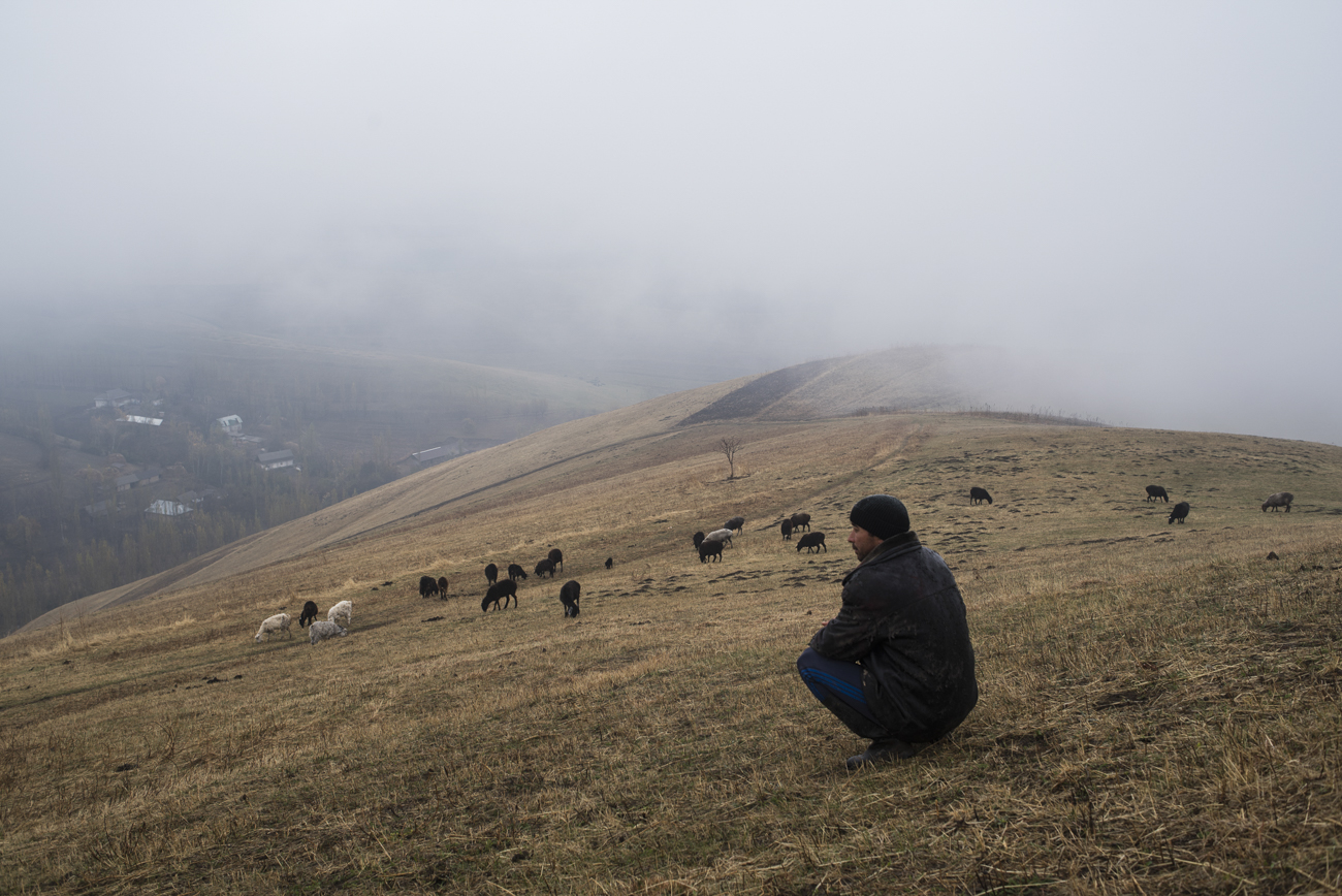 Arslan with a grazing flock of sheep in the village of Ayuu