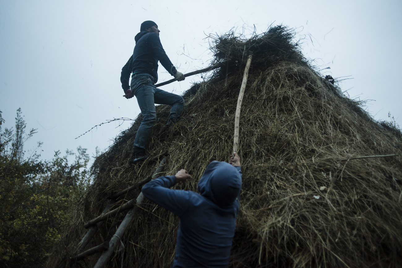 The Sulaimanov brothers Arslan and Kakhramon cover a haystack from the snow.