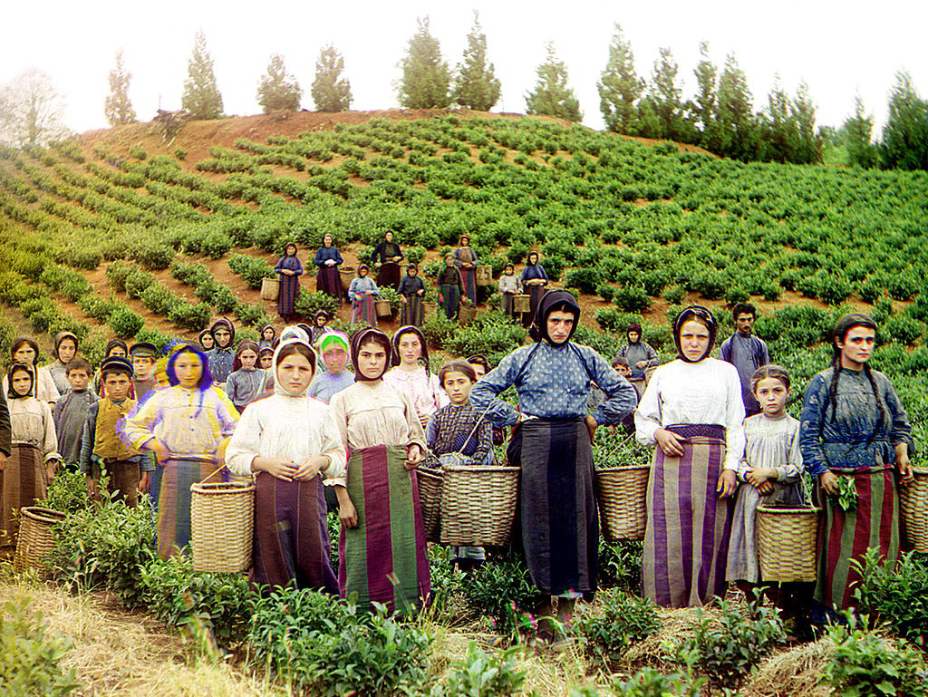 Greek workers harvesting tea on Georgia's Black Sea coast, early 20th century. (Photo: Sergey Prokudin-Gorsky/Library of Congress)