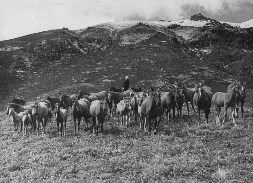 Large droves of horses, owned by collective farms, pasture in the mountains of the Tajik Soviet Republic