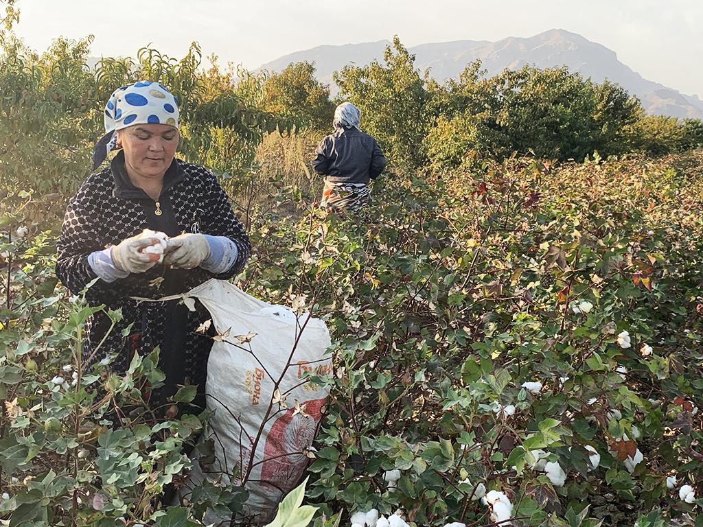 Tajikistan cotton