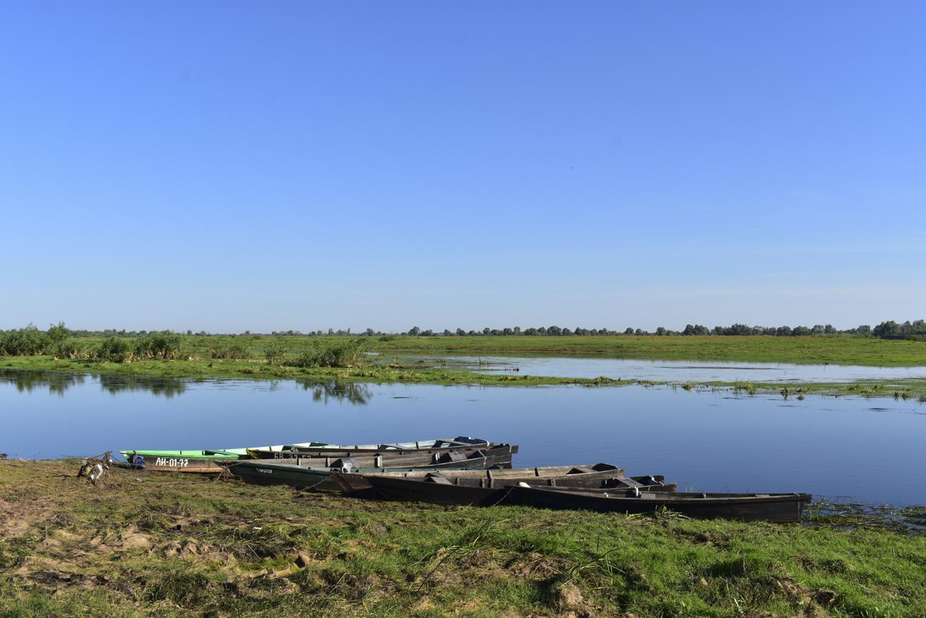 Turov Meadow