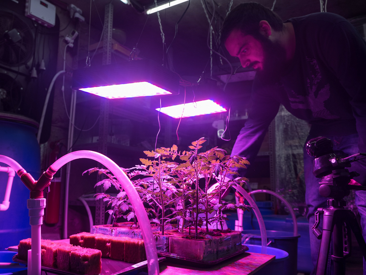 Siradze's hydroponic tomato-growing experiment harnesses heat from his bitcoin mining operation. Ten plants, four different tomato varieties, are all grown from seed.