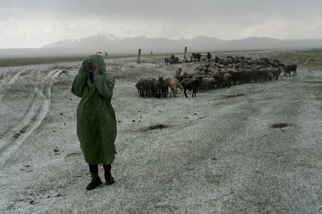 Myrbek, 20, looks for sheep separated during a hail storm.
