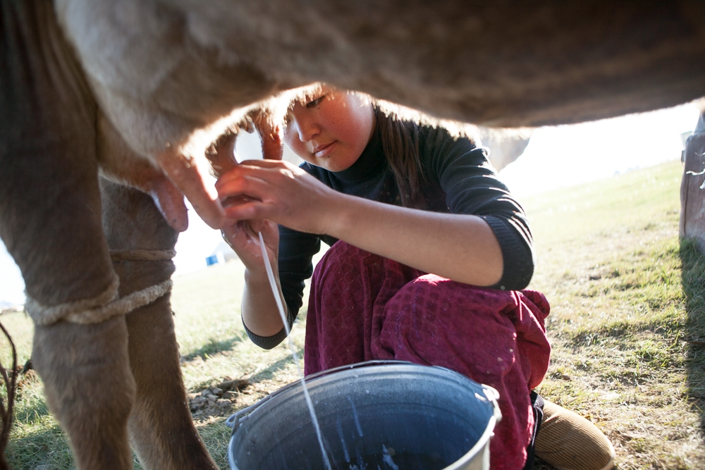 A young woman does the milking in Song Kul. (Photo: David Trilling)