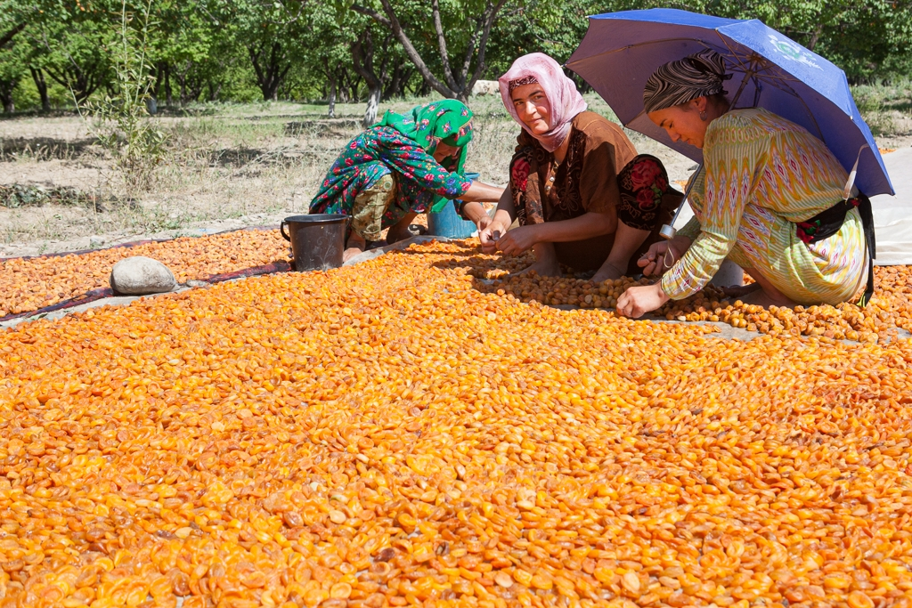 Tajiks preparing apricots for export (David Trilling)