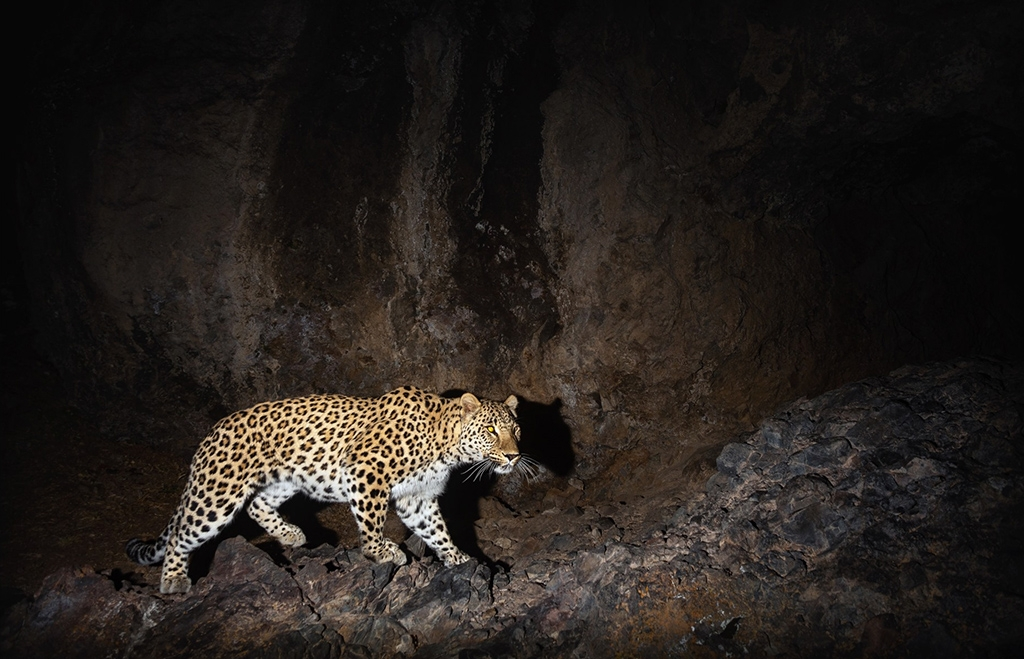 A Caucasian leopard at Khosrov Forest State Reserve (WWF)