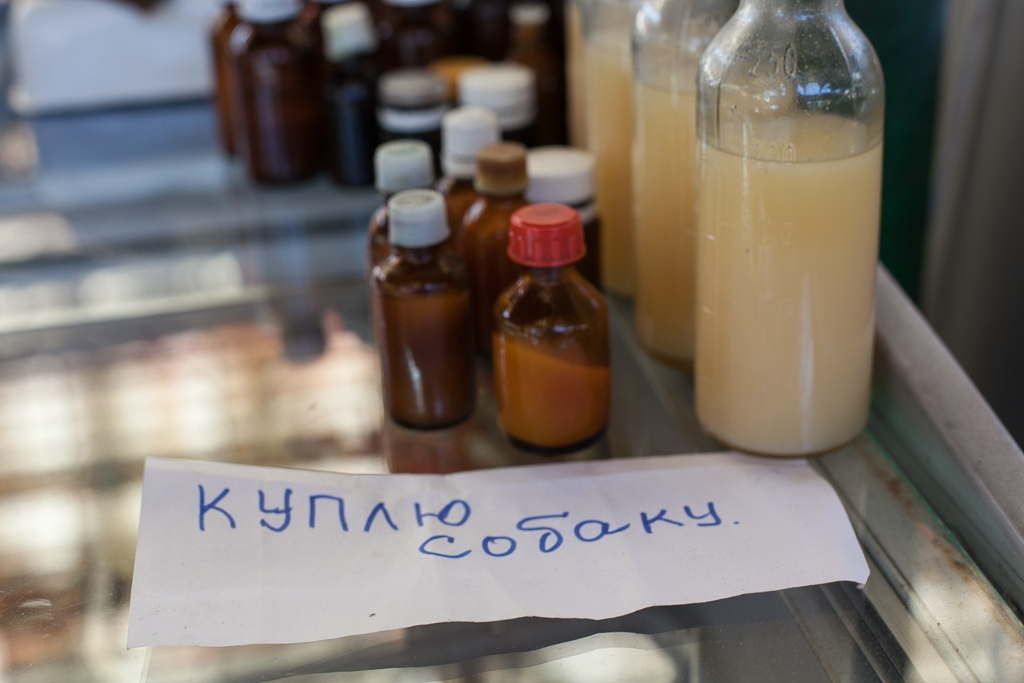 Bottles of dog fat in a Bishkek market accompanied by a request for live dogs (photos: Eurasianet)