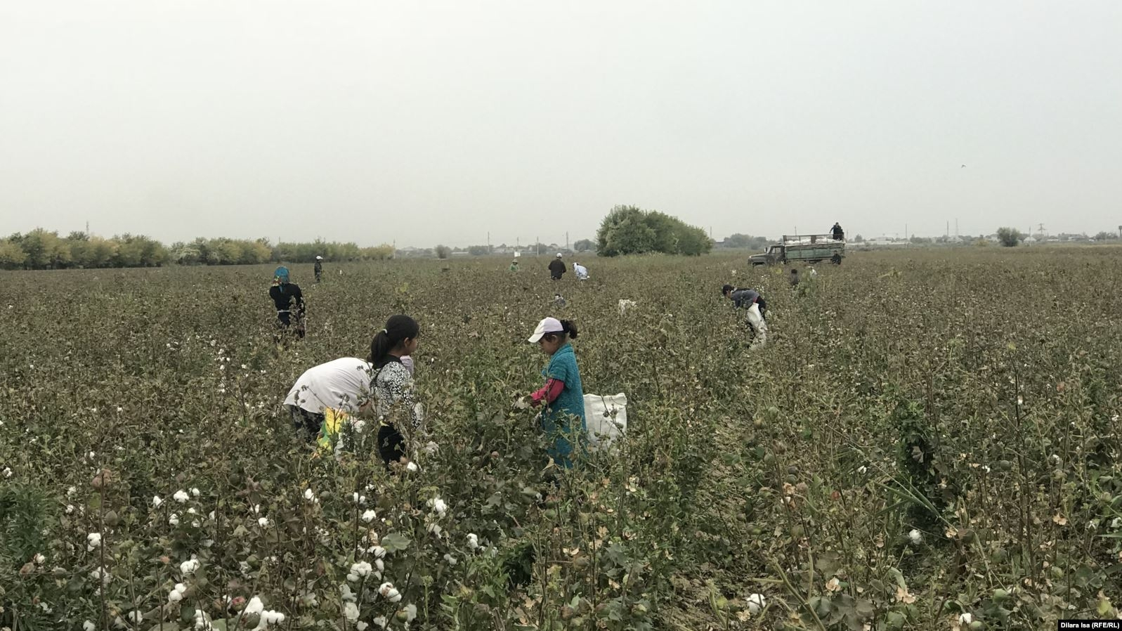 Children picking cotton field in September. (Photo: Dilara Isa / RFE/RL)