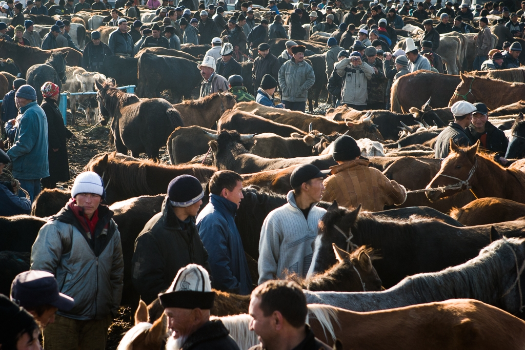 Livestock to be prevented from leaving for now (photo: David Trilling)