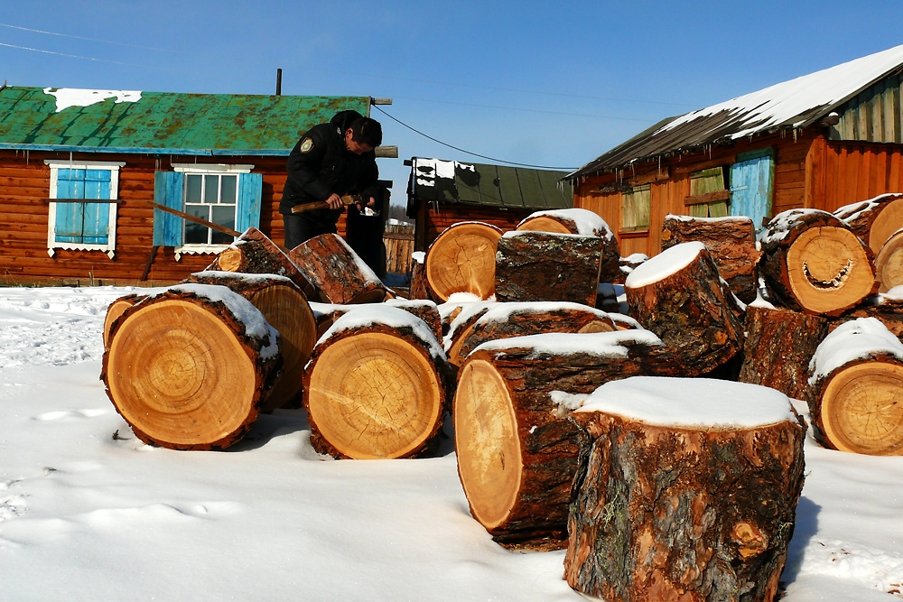 A man prepares to chop firewood in his front yard in Khatgal.