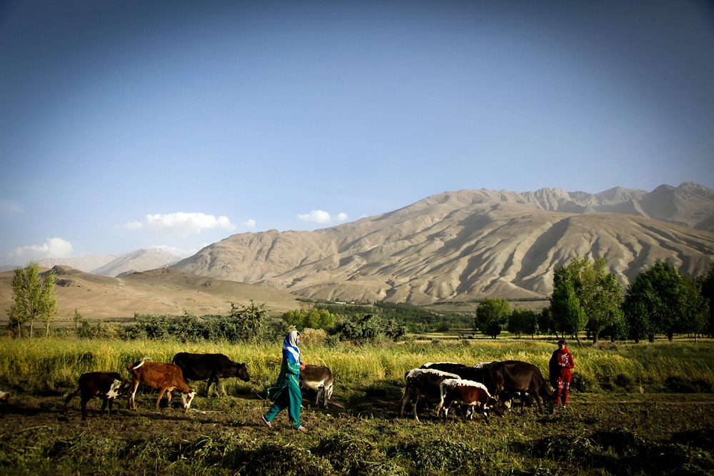Young Wakhi girls let their cattle graze in a field in the Badakhshan province of Afghanistan.