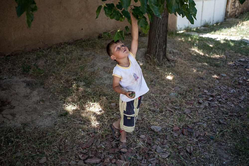 A young Tatar boy named Yunus reaches for mulberries.