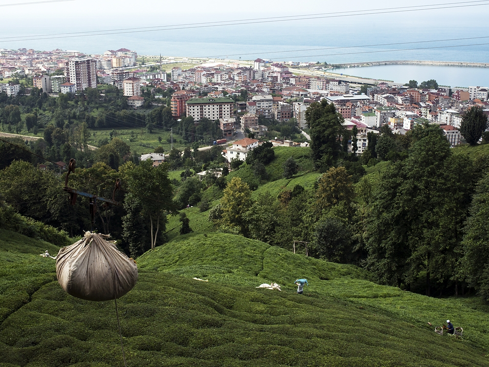 Full bags of tea leaves are hauled uphill by cables for delivery to a warehouse.