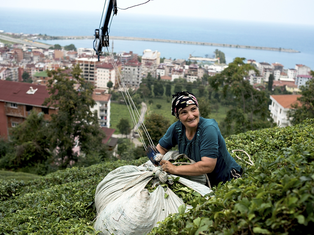 A woman ties up a full bag of tea leaves for delivery to the top of the hill.