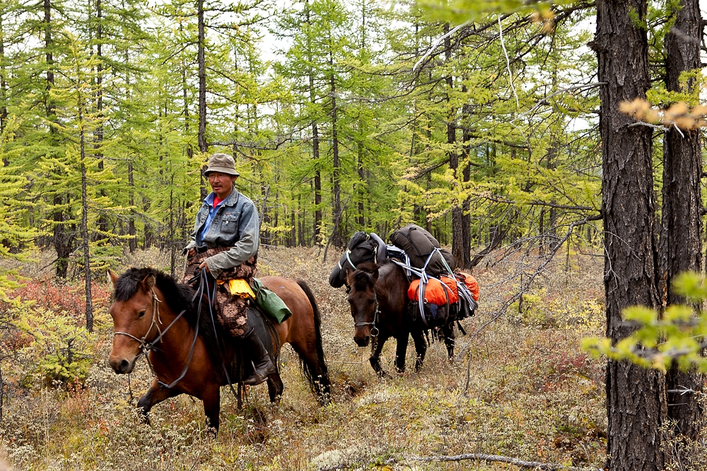 Guide Bayanmunkh leads a packhorse through a forested section of the taiga, which is slushy in summer.