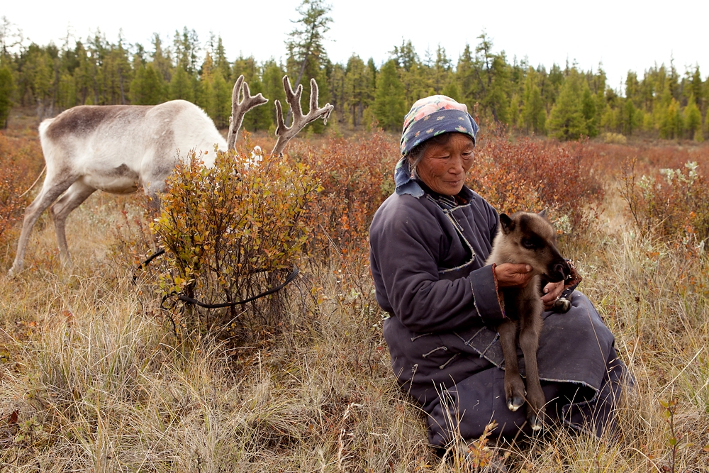 Darimaa checks a reindeer fawn - born a few hours earlier - for signs of defects or poor health.