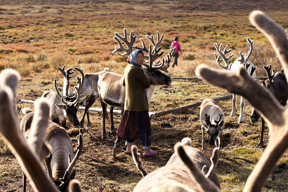 Byunaa calls her younger daughter to help tie up the reindeer as they return to their owners after grazing.