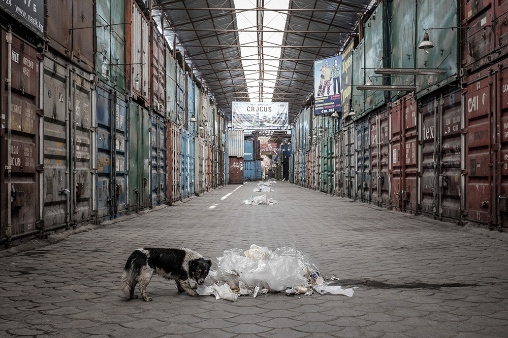 A stray dog picks through garbage for food.