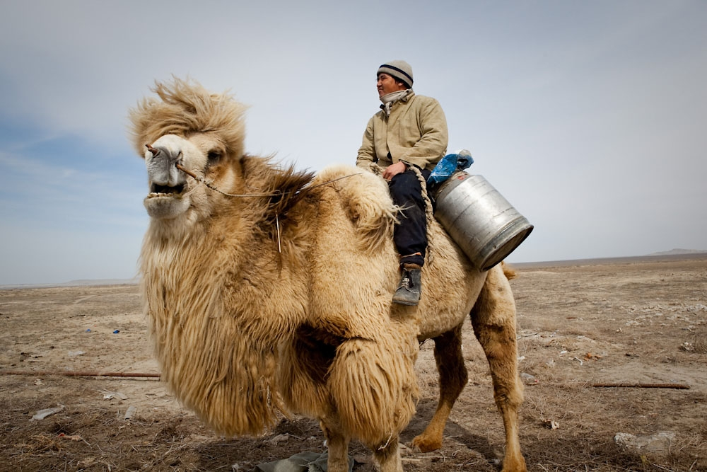 A camel herder heads to a well for water.
